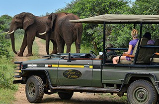 Land Rover African Safari