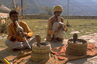 Cobra Snake Charmers New Delhi India