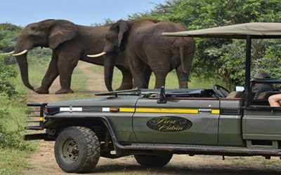 Safari Should Rein Supreme At The Top Of Each Bucket List