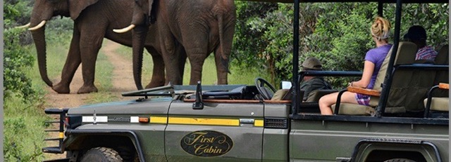 Safari Should Top Each Bucket List